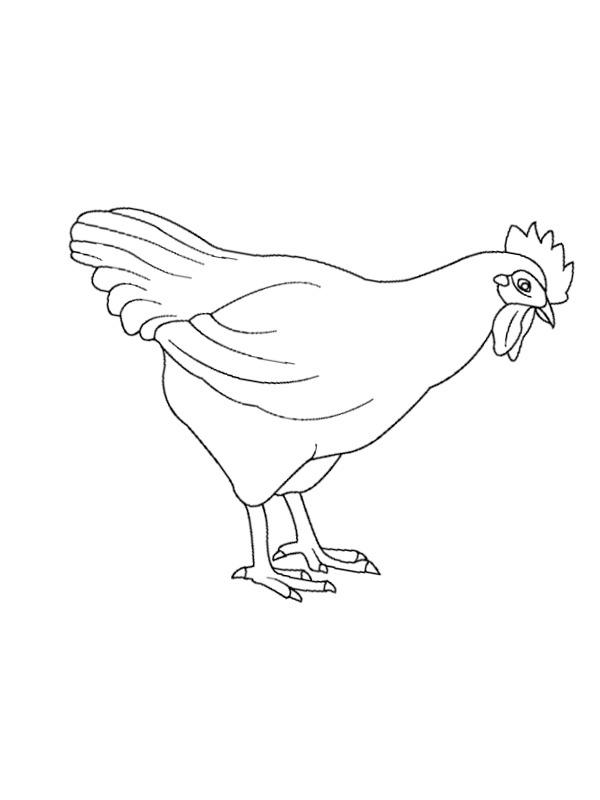 Colouring Page Chicken Coloringpage Ca