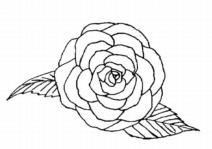 Single Rose Coloring Page Coloring Page Amp Book For Kids