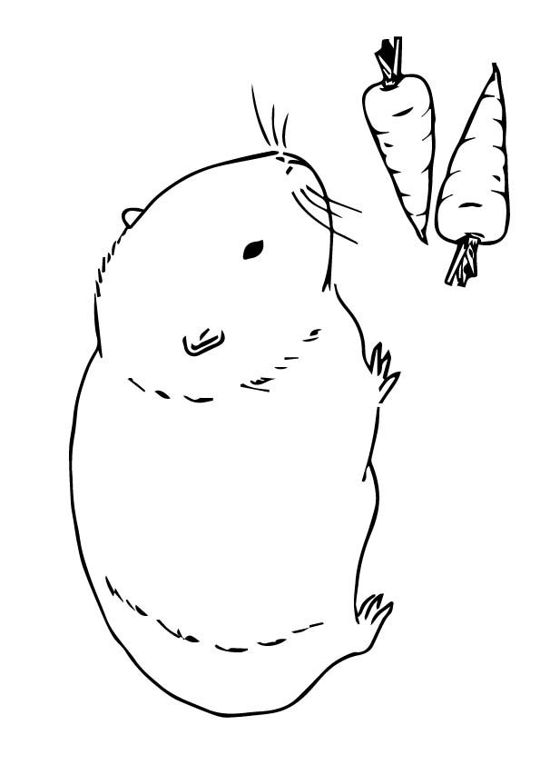 guinea pig coloring page # 6