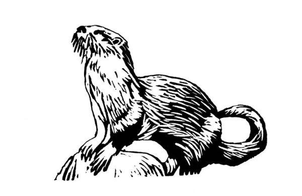 otter coloring page # 69