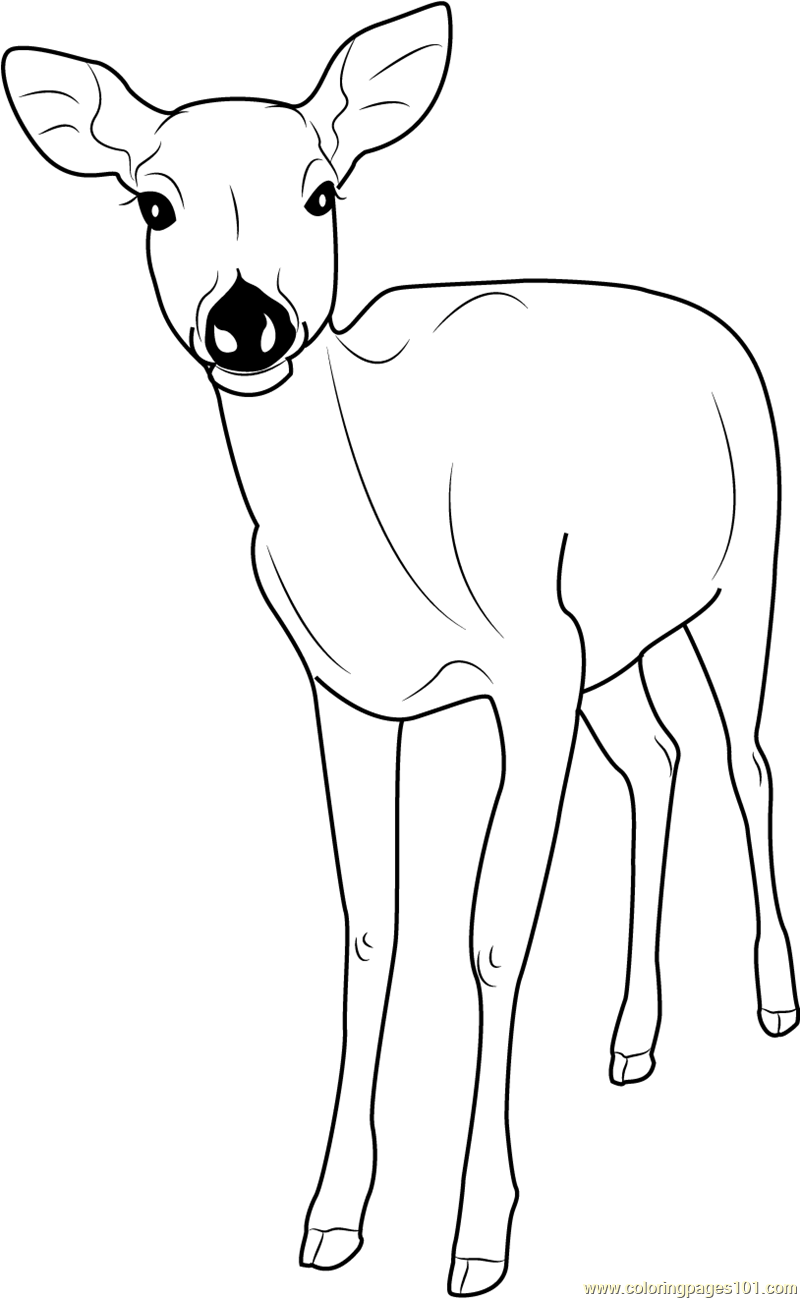 Deer Coloring Pages Free Coloring Pages Download | Xsibe deer ...