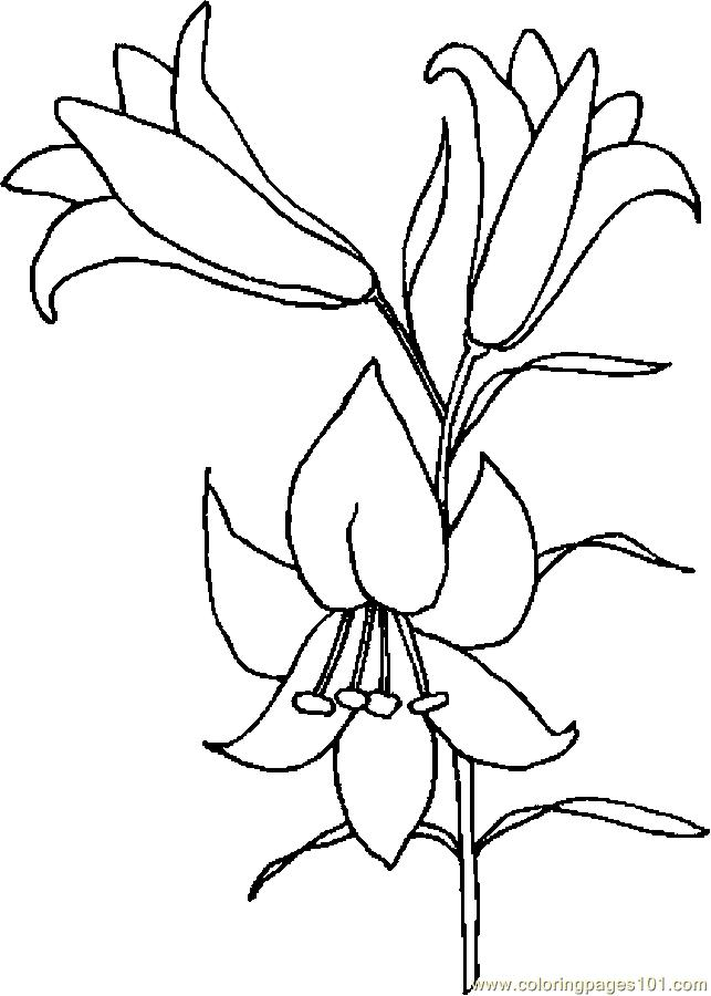 Easter Lily 6 Coloring Page Free Holidays Coloring Pages