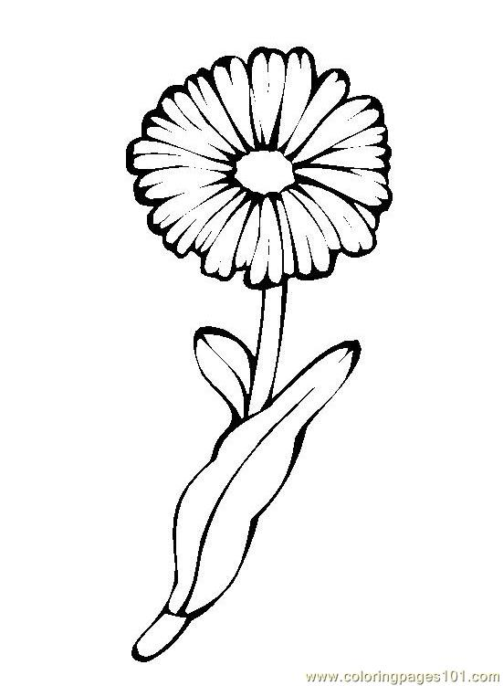 Flower Picture 4 Coloring Page Free Flowers Coloring