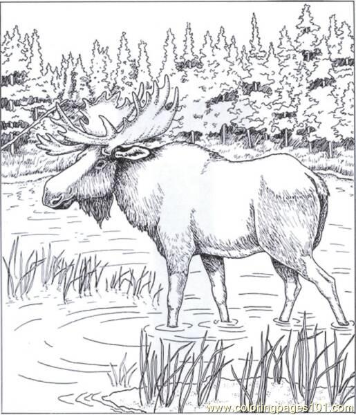 moose coloring page # 52