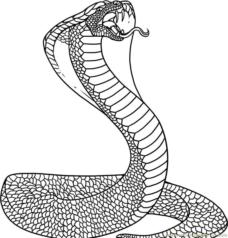 Snake Coloring Page Free Snake Coloring Pages Coloringpages101 Com