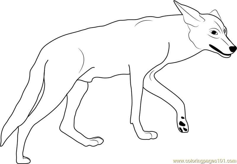 Coyote In California Valley Coloring Page Free Coyote