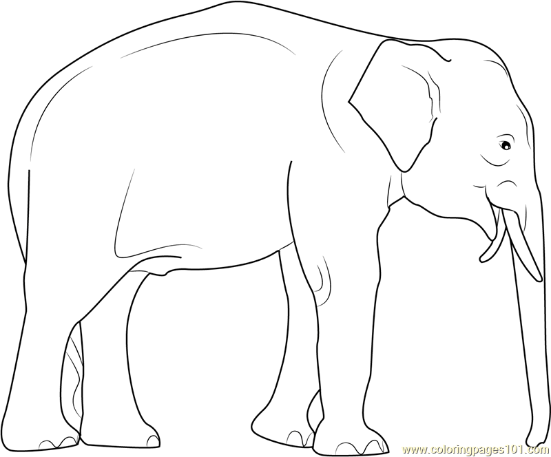 Elephas Maximus Coloring Page Free Elephant Coloring