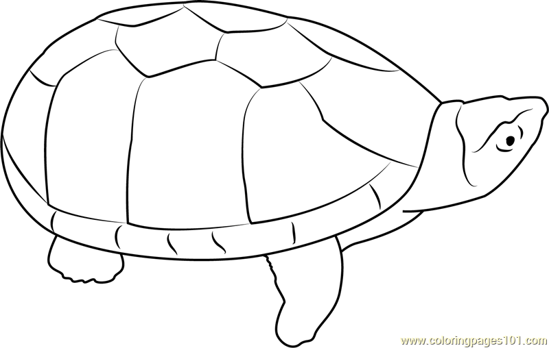 Musk Turtle Coloring Page Free Turtle Coloring Pages Coloringpages101 Com