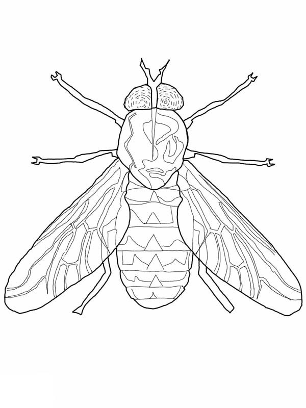 Fly coloring page kids coloring sky, love bug coloring pages