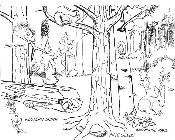 forest where animals live coloring page  coloring sky