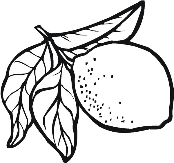lemon for sale coloring page  coloring sky