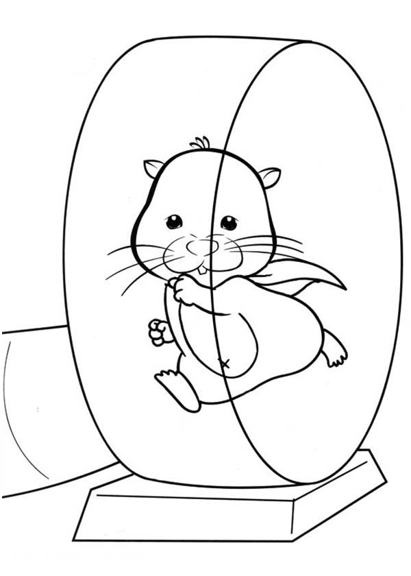Pet Hamster Running On Exercise Wheel Coloring Page Coloring Sky