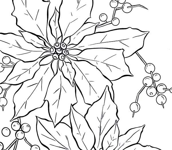 poinsettia fruit for poinsettia day coloring page