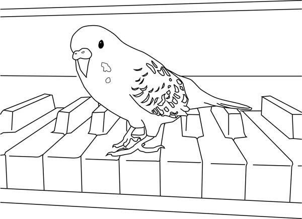 parakeet playing piano coloring page parakeet playing