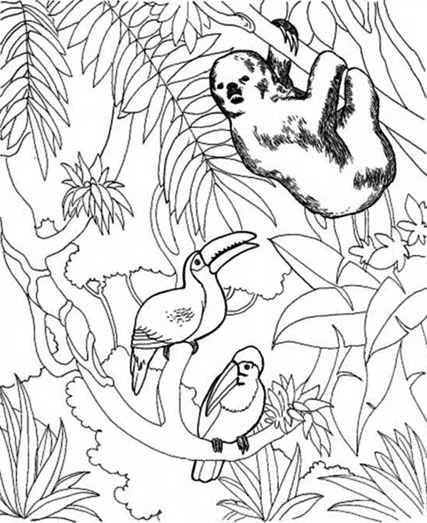 sloth and birds coloring page  color luna