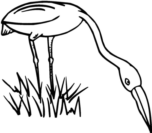 grass grow so well coloring pages  color luna
