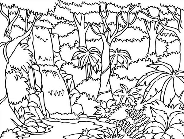 Beautiful Rainforest Coloring Page
