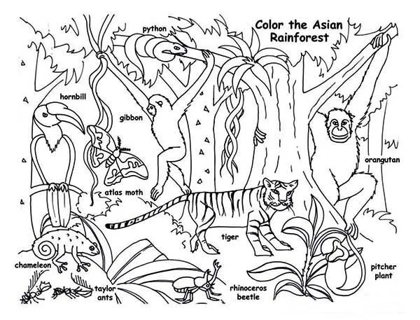 rainforest animals coloring page  download & print online