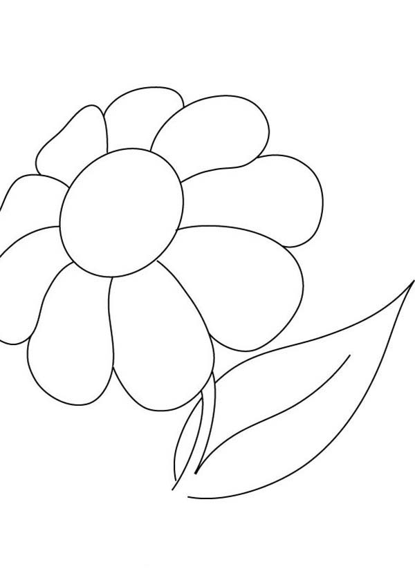 Pretty Picture Of Daisy Flower Coloring Page Download
