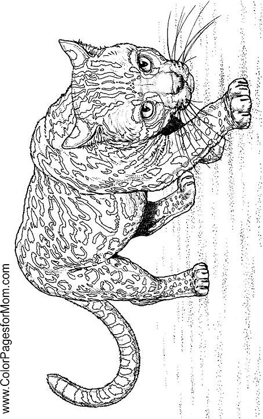 Animals 160 Advanced Coloring Pages
