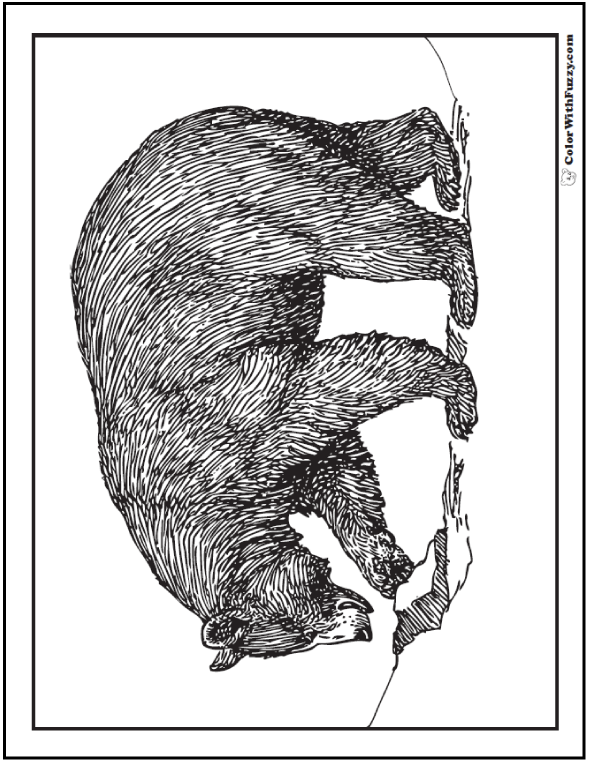 bear coloring pages grizzlies koalas pandas polar and