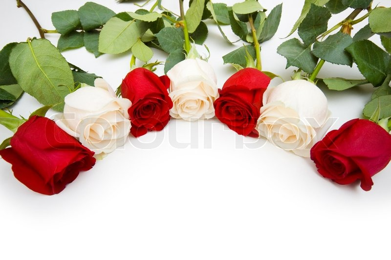 Roses Arranged On White Background With Copyspace Stock