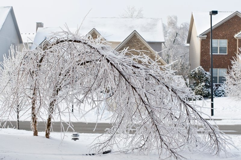 Trees On A Street Covered With Ice After Freezing Rain