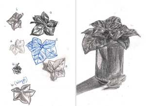 Ivy leaf - first drawings by Iris Hopp
