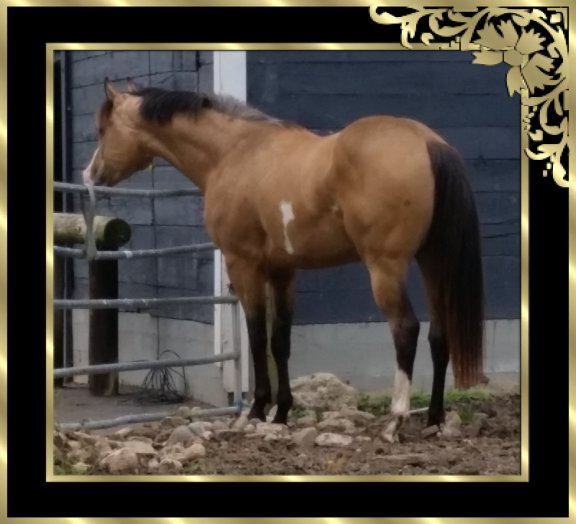Colour WASH Farm Foals 2010 2011 2012 2013