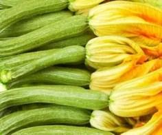 Zucchine varietà Fiorentina