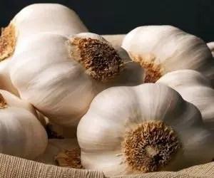 Infuso d'aglio - macerato d'aglio-varietà bianco Polesano