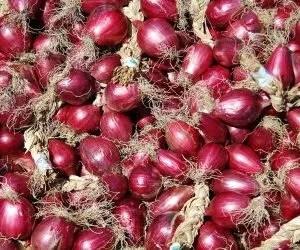 Coltivare cipolle rosse di Tropea