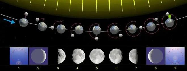 Ciclo lunare - moto della luna durante il mese sinodico