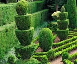 potatura-giardino-di-siepi