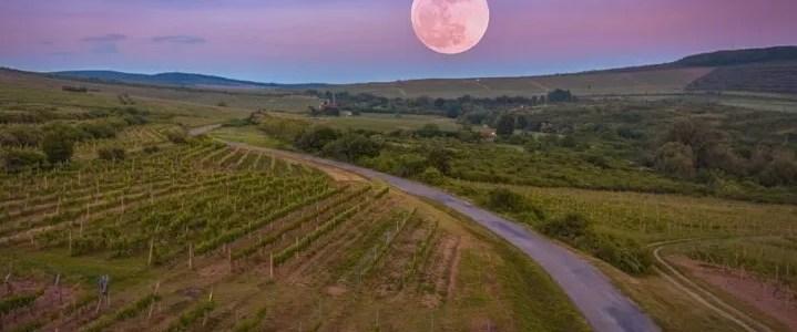 Il calendario lunare di ottobre. Quali lavori fare nell'orto questo mese?