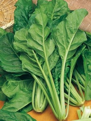 coltivare-la-bietola-foglie-delicate
