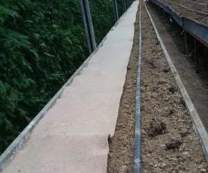 Quattro teli di juta per pacciamatura biodegradabile orto- stesura del telo