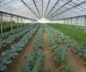 Rincalzatura delle piante