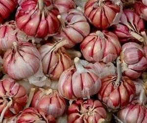 coltivazione aglio-teste di aglio rosso