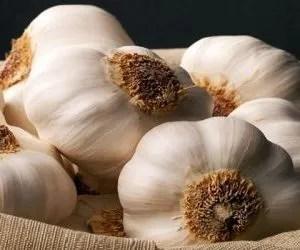 coltivazione aglio varieta bianco polesano