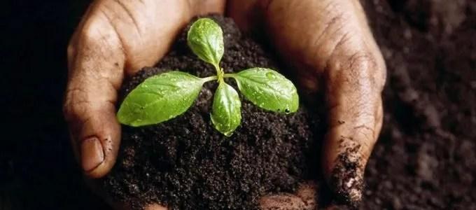 La concimazione naturale dell'orto con il sovescio di leguminose