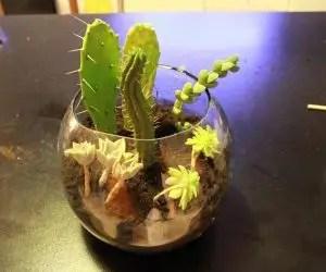 Composizione di piante grasse in vaso di vetro