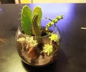 Piante Grasse In Vetro.Realizzare Una Composizione Di Piante Grasse In Una Bottiglia Di Vetro