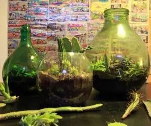 Composizione piante grasse in damigiane di vetro