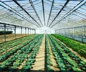 Manichette per irrigare l orto in serra