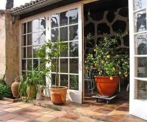 Albero di limone in vaso da esterno