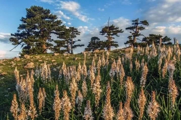 Pini Loricati su Selletta della Porticella Parco Nazionale del Pollino