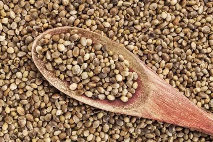 Uso alimentare e industriale dei semi di canapa