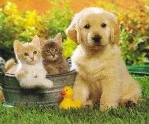 Fitoterapia Alimentazione per cani e gatti