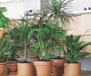 Innaffiare piante in vacanza
